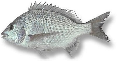 Dorade (Bream)